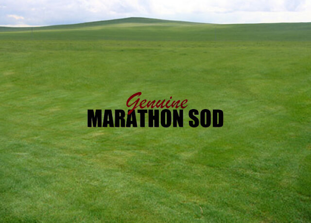 Fresh Sod Delivery Services