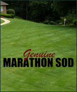 Farm Fresh Marathon Sod